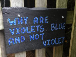 Why are violets blue and not violet? - Tasmazia